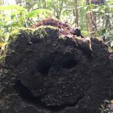 Happiest tree trunk out there
