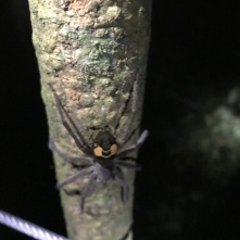 Spider, just chilling